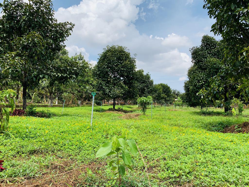 Đất vườn không được coi là đất phi nông nghiệp
