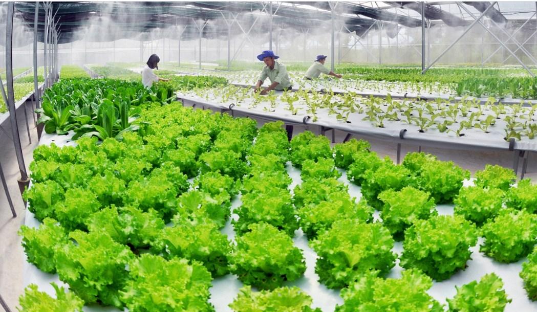 Điều kiện, thủ tục, hồ sơ xin cấp đất làm trang trại 2021