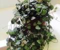 Thêm sức sống cho ngôi nhà bằng những chậu cây mọng nước cực xinh yêu