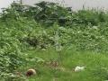 Bán đất thổ cư 4,2 x 19m  Nguyễn Quý Yêm, q. Bình Tân, HCM 2,7 tỷ - 0907.542.157