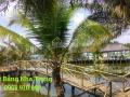 Cho thuê mặt bằng kinh doanh, KDL sinh thái tại Nha Trang