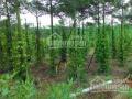 Bán vườn tiêu phủ 2m ở Cẩm Mỹ, Đồng Nai, giá 1.8 tỷ, 1.2ha, giấy tờ đầy đủ, chính chủ: 01689335424