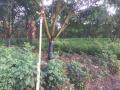 Cần bán đất trang trại chăn nuôi nghỉ dưỡng tại xã Sông Ray huyện Cẩm Mỹ . 2,5ha LH 0908759337