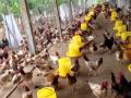 Hot, bán gấp 10.000m2 đất trang trại tại Chương Mỹ, Hà Nội