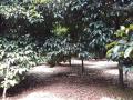 Bán 1.4ha đất vườn xã Xuân Lập - cách QL 1A 3,5km