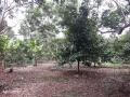 Bán trang trại đất vườn có thổ cư, giá 2.5 tỷ, xã Bình Lộc