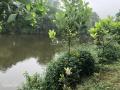 Cần bán gấp 2850m2 đất mặt hồ tại Tiến Xuân, Thạch Thất, HN, giá 1,1 triệu/m2