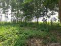 Cho thuê đất trang trại tại Hà Nội, LH: 0971763613