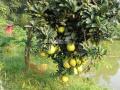 Cần bán 5ha đã hoàn thiện, có trang trại, có trạm điện, có ao trên đất nhiều cây ăn quả. Giá 8 tỷ