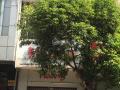 Bán nhà đường Lê Đức Thọ, phường 15, Gò Vấp DT 5x26m 4 lầu giá 15 tỷ, LH 0903147130