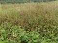 Bán đất Xuân Thọ - Đà Lạt, gần đường quốc lộ - LH: 0985002738