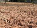 Cần bán đất lớn mặt tiền đường Xuyên Á (Quốc Lộ 22)