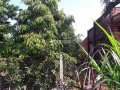 Cần bán đất mặt tiền đường nhựa lớn Xuân Bảo, DT: 3.123m2, giá 2,4 tỷ