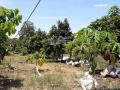 Cần bán đất vườn khu vực Xuân Tây, huyện Cẩm Mỹ, tỉnh Đồng Nai