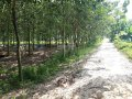 Bán đất vườn cao su 10.000m2, giá 3.1 tỷ Quốc Lộ 19 (gần ngã 3 Đất Sét), xã Truông Mít