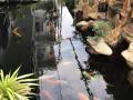 Cho thuê biệt thự du lịch mới xây dựng, view sông cực đẹp, cơ hội kinh doanh cực tốt