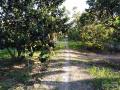 Bán 5350m2 đất vườn cặp sông 43m, nở hậu. Giá 2.000.000đ/ m2