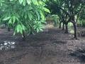 Bán 636m2 đất vườn trồng cây lâu năm, tại mặt đường Liên Xã, Song Phương và xã Vân Côn, Hoài Đức