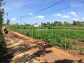 Bán đất vườn xã Sông Ray, huyện Cẩm Mỹ