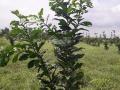Cần bán đất Xuân Đông, Cẩm Mỹ, Đồng Nai trồng tiêu, hệ thống pec tự động, có 300m2 thổ cư