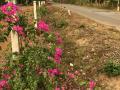 Chính chủ bán lô đất 9600m2, có 300m2 TC sổ đỏ chính chủ mặt tiền đường nhựa Phước Bình, Long Thành