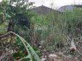 Cần bán 500m2 đất vườn, sổ hồng riêng, giá tốt nhất đường Tập Đoàn 4, Tân Kim, Cần Giuộc, Long An