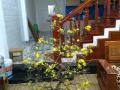 Chính chủ cần bán nhà 3 tầng Phạm Nhữ Tăng Liên hệ : 0775555311 Anh Linh