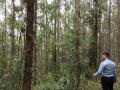 Cần bán 10 ha đất rừng sản xuất tại Tràng Định - Lạng Sơn