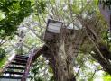 Ngôi nhà trên cây táo bạo và khác lạ của Đào Anh Khánh