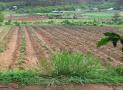 Thời điểm tính thu tiền sử dụng đất là khi nào?