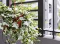 15 cây cảnh tốt cho sức khỏe nên có trong nhà bạn