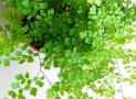 Cây trồng ban công - Nên chọn loại cây nào và chăm sóc ra sao?
