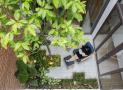 Trồng cây gì ở giếng trời để nhà xanh mát, giàu sinh khí?