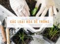 Top các loại hoa dễ trồng và cách chăm sóc cơ bản
