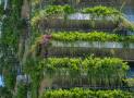 Công trình xanh gia tăng ở Việt Nam nhờ những hỗ trợ và hành động của Chính phủ