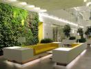 Những loại cây xanh tốt cho văn phòng