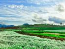 Lập nhiệm vụ và đồ án Quy hoạch xây dựng Khu du lịch quốc gia Mộc Châu