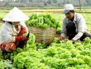 Ba đối tượng được miễn toàn bộ thuế sử dụng đất nông nghiệp
