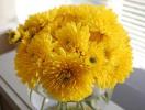 5 loại hoa mang lại may mắn trong ngày Tết