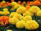 Tuyệt đối tránh những loại hoa này trên bàn thờ ngày Tết