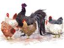 Có nên cúng gà trong năm con gà?