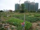 Lệ phí chuyển đổi từ đất vườn sang đất ở?