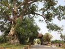 Những loài cây mang điềm rủi không nên trồng tại nhà