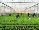 Phê duyệt quy hoạch 7 vùng nông nghiệp công nghệ cao tại Đà Nẵng