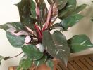 6 loại cây rất dễ chăm sóc nên trồng trong nhà