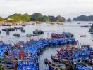 Phê duyệt điều chỉnh quy hoạch cảng cá tại khu vực đảo Cát Bà