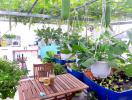 Vườn rau xum xuê trái trên sân thượng ở Sài Gòn