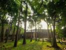 Nhà vườn Hà Nội độc đáo với cây mọc xuyên mái