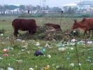 Đà Nẵng: Đất bỏ hoang do cấp cho doanh nghiệp không có dự án