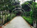 Khu vườn hơn 600m2 rực rỡ sắc hoa của cô giáo dạy Toán